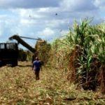 Zafra cubana logra mayor producción en los últimos 20 años, según directivos