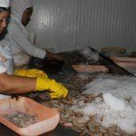Crecen las producciones de la industria pesquera de Manzanillo