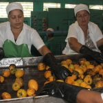 Entrega, calidad y dedicación, premisa de Fábrica de Conservas La Manzanillera