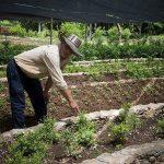 Agricultura, Campesinos, Cuba, Ecología, Fotografía, Medio Ambiente, Sociedad