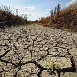 Se impone la búsqueda de alternativas para enfrentar la sequía.
